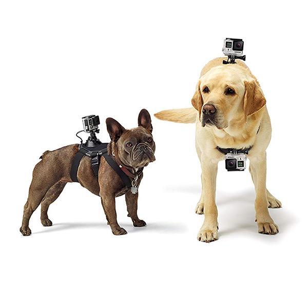 Dog-GoPro-Life-.jpg